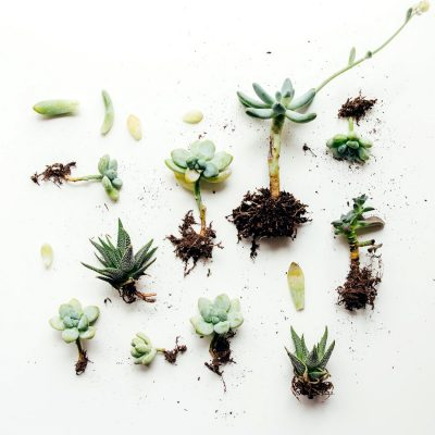 amazonas-importancia-ambiental